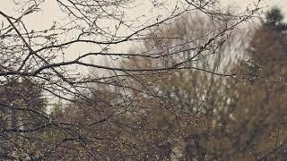 Kurzfilm: RainyDay - Vordergrundbild