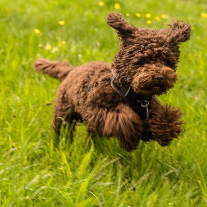 Spaziergang: Durch Nümmen mit meiner Mutter und ihrem Hund Bobby' - Hintergrundbild