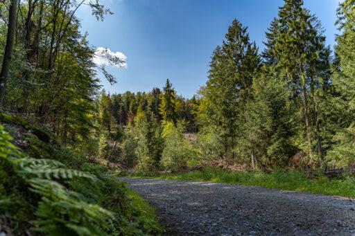 Spaziergang: Glüder - Sengbachtal - Vordergrundbild